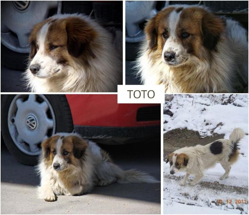 urgences - LES URGENCES DE TAMARA Toto_m10