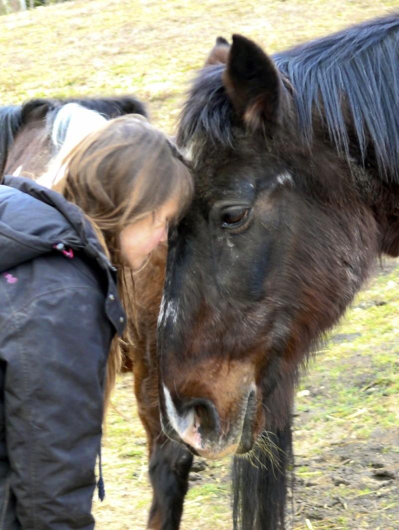La mort du cheval de ma mamie sur qui je suis montée pour la première fois P1110810