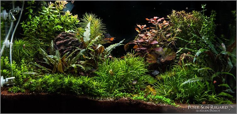 O'Rel Rio 125L Amazonien - Page 2 Dsc_5510