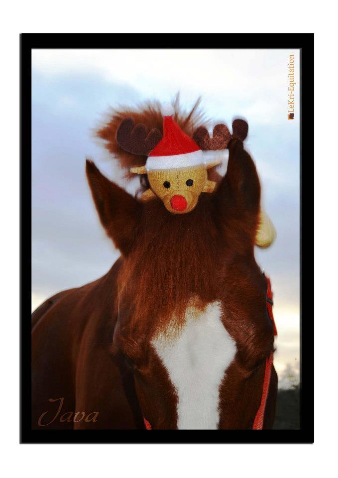 Concours : les chevaux et Noel ? 41812513