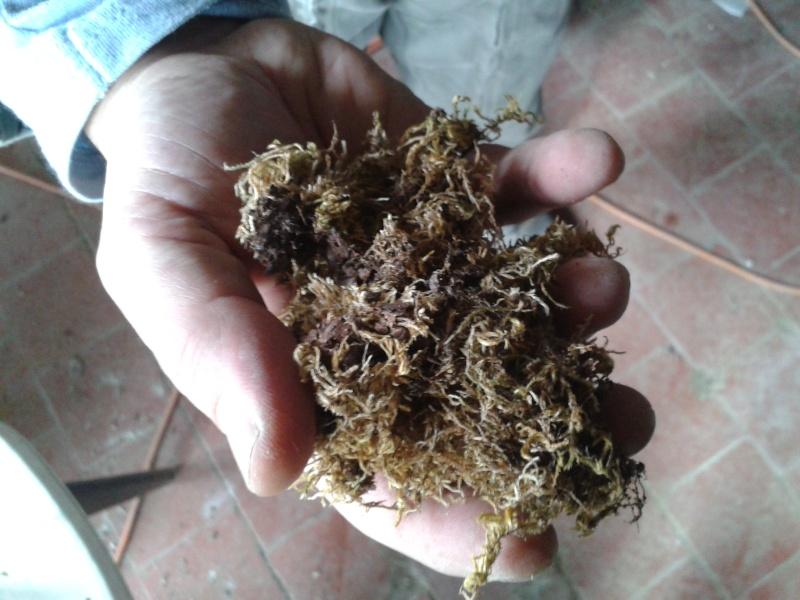 Dans la nature il n'y a pas de coton carbonisé ! 2013-010
