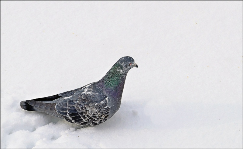 Promenade dans la neige Dsc_0811