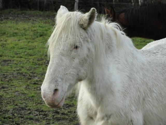 VENUS - ONC poney née en 1987 - adoptée en octobre 2012 par souris73 - Page 6 Vanus_10