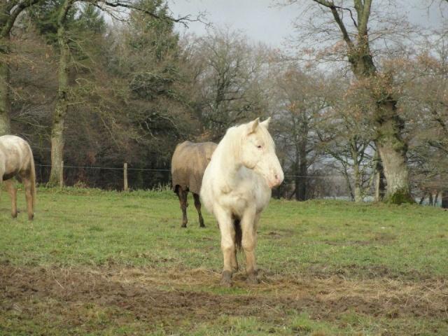 VENUS - ONC poney née en 1987 - adoptée en octobre 2012 par souris73 - Page 6 Vanus_11