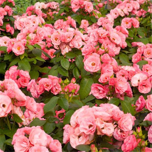 rosier bouquet de mariée I-gran10