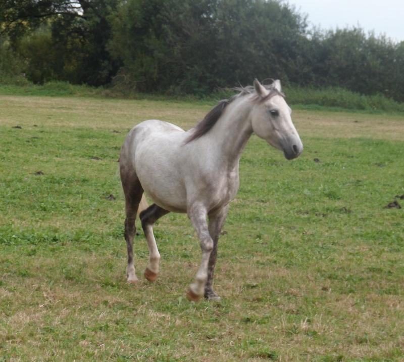 ALONA dite LOUNA - ONC Poney née en 2010 - adoptée en novembre 2013 par Brigitte Alona210