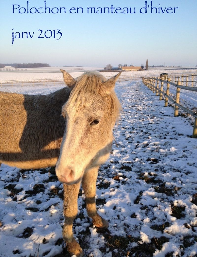 EXIT dit POLOCHON - PSAR né en 1993 - adopté en janvier 2011 par Jazzye - Page 4 Captur49