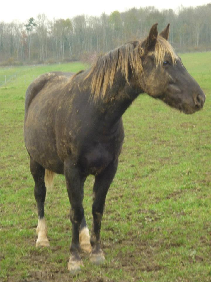 PELIPA - ONC Poney née en 2007 - adoptée en septembre 2014 par Ceed Pelipa13