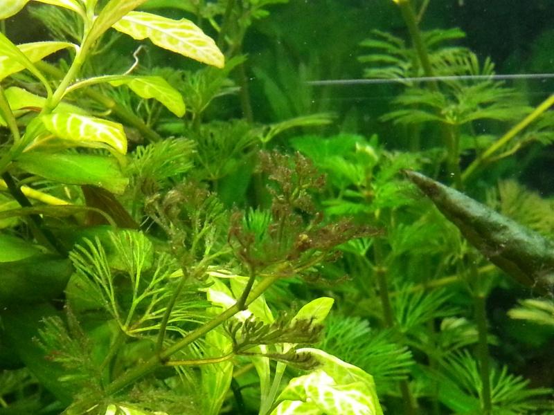 Problèmes d'algues 20130110