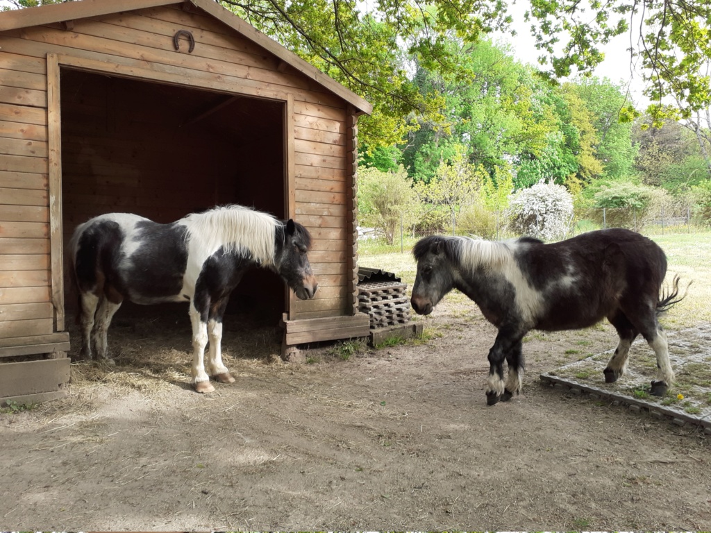 PRUNELLE - ONC poney née en 1986  - adoptée en octobre 2012 par Prosper - Page 4 20200410