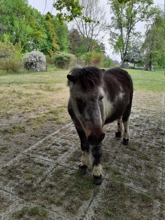 PRUNELLE - ONC poney née en 1986  - adoptée en octobre 2012 par Prosper - Page 4 20200411