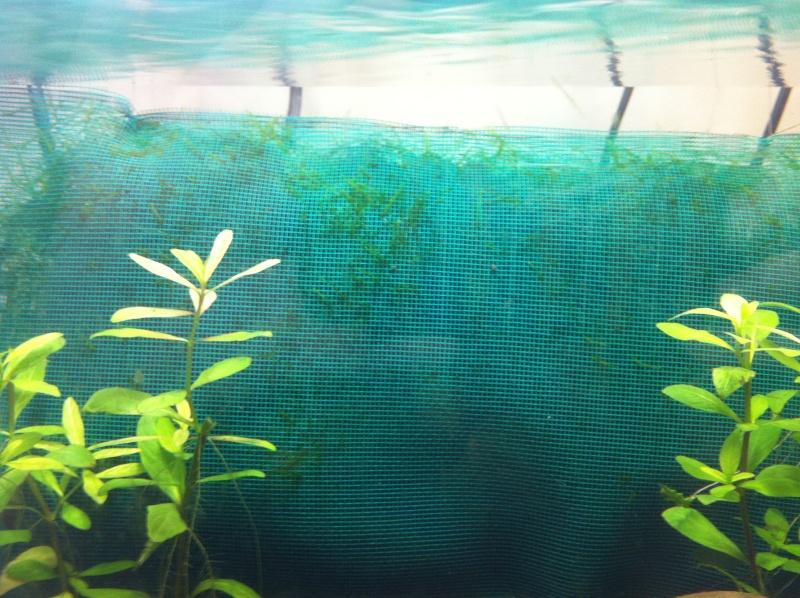 Mon projet nano spé crevettes enfin réalisé Img_0216