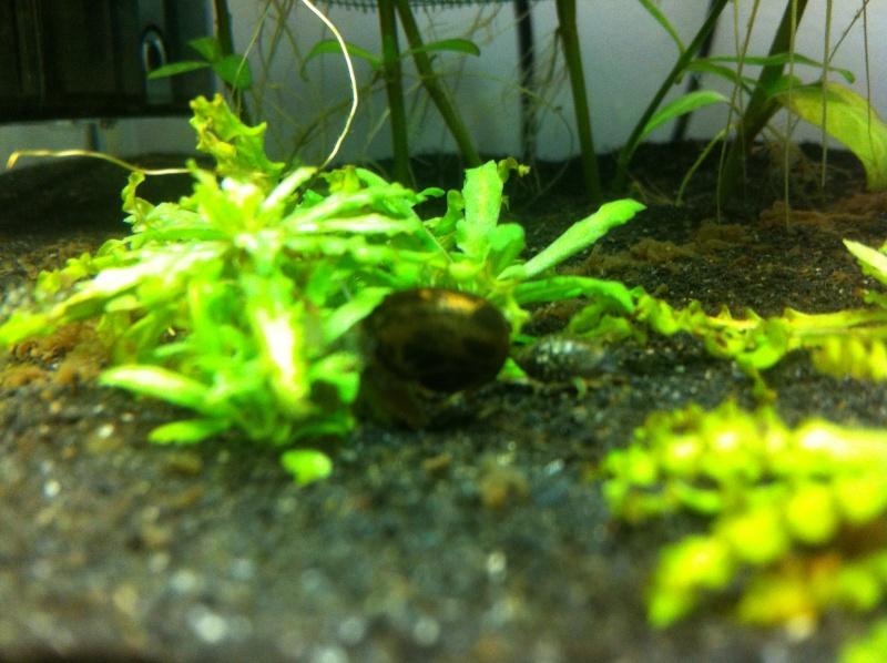 Mon projet nano spé crevettes enfin réalisé Img_0222