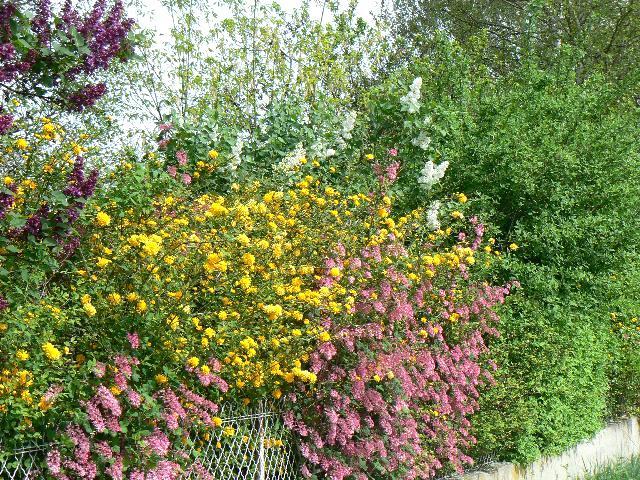 au jardin P1190510