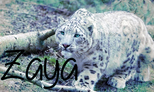 Amies ou ennemies ? ~ Lira et Zaya ~  Cadeau13