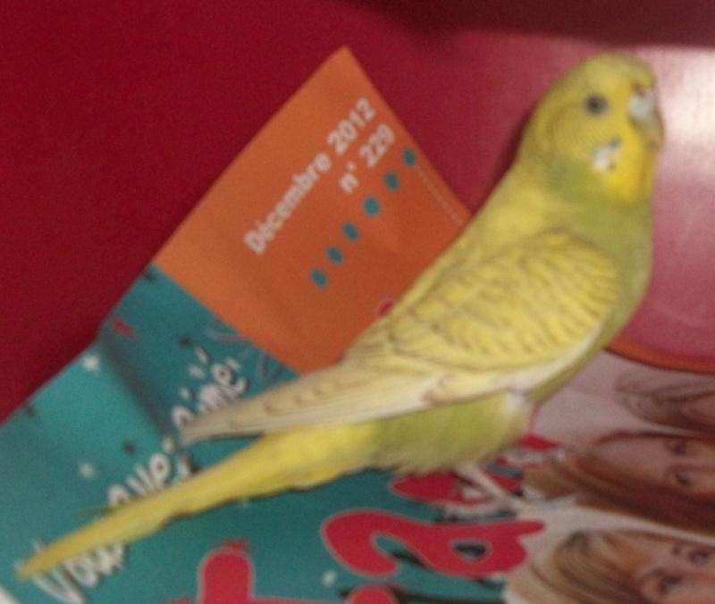soleil mon oiseau 100_0712