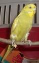 soleil mon oiseau 100_0713