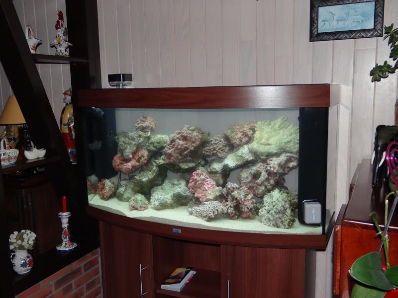 photo de mon 1er aquarium (re tentative) Dsc00112