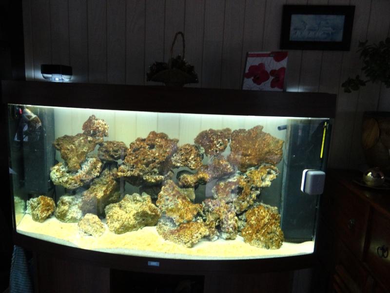 photo de mon 1er aquarium (re tentative) Dsc00210
