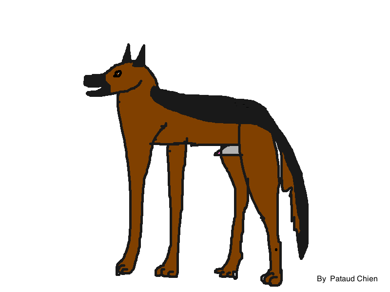 Projets faites des dessins de chiens svp - Dessin de chien berger allemand ...