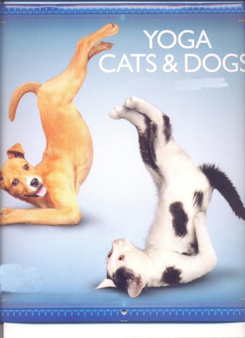 Meet the Yoga Cats and Yoga Dogs Yoga_c10