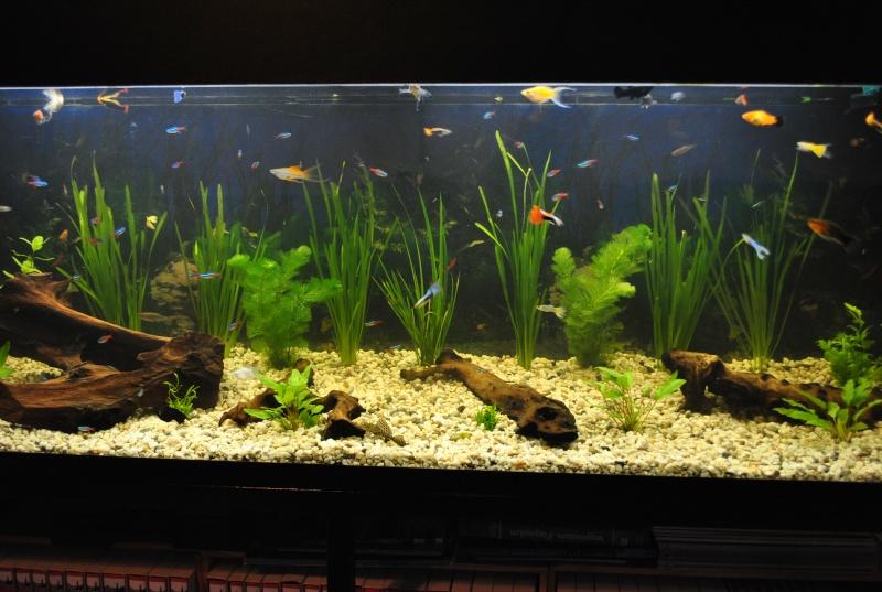 mon aquarium de 360 litres  Aquari10