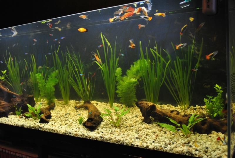 mon aquarium de 360 litres  Aquari11