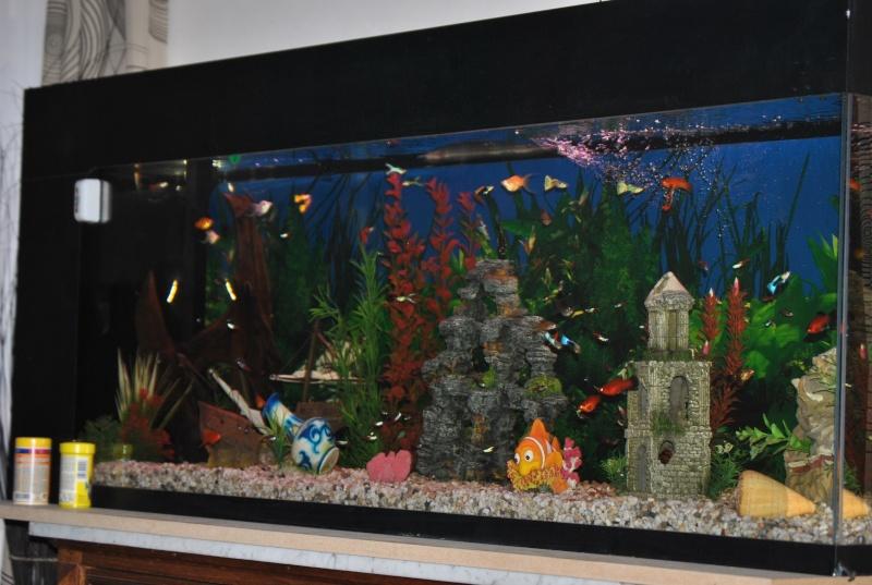 mon aquarium de 360 litres  Dsc_0013