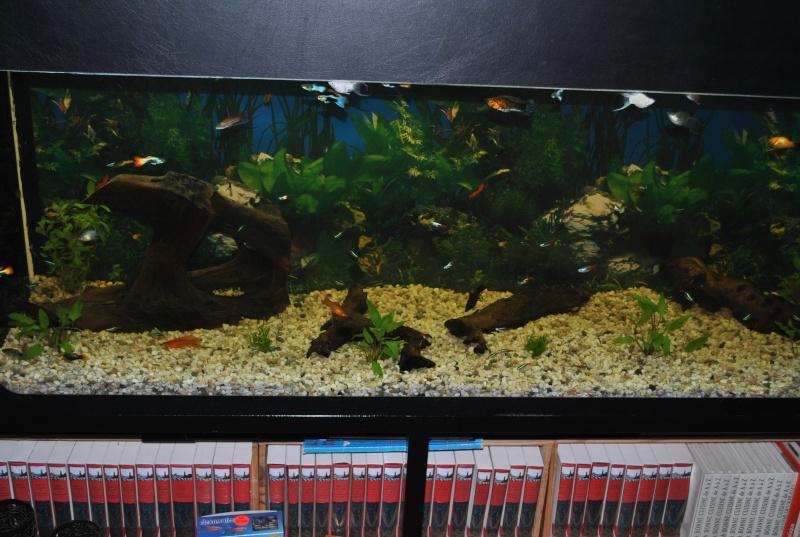 mon aquarium de 360 litres  Dsc_0015
