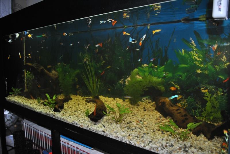 mon aquarium de 360 litres  Dsc_0016