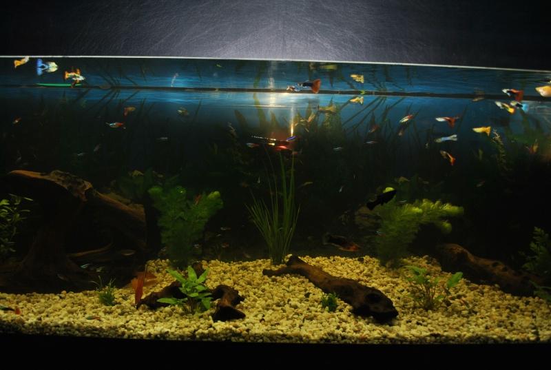 mon aquarium de 360 litres  Dsc_0017