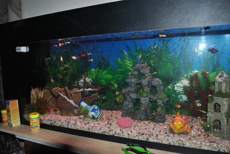 mon aquarium de 360 litres  - Page 2 Dsc_0020
