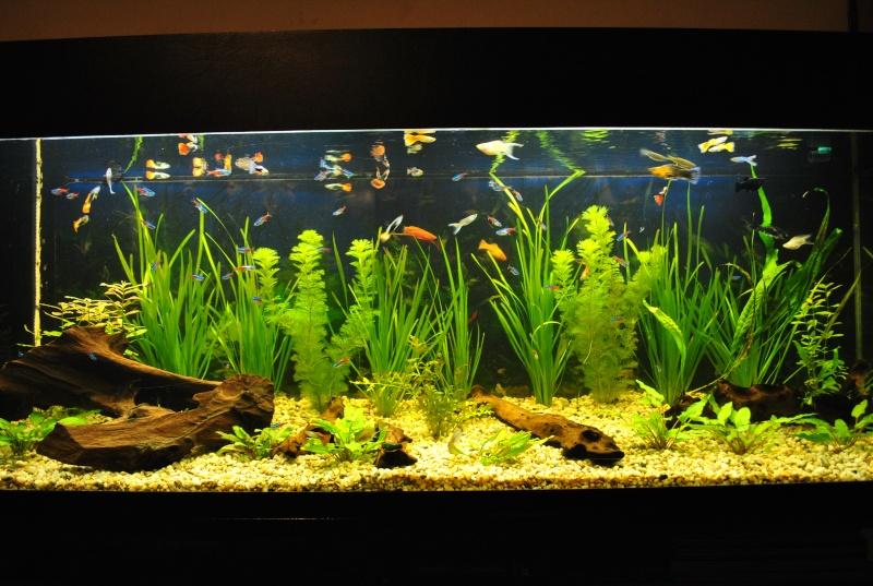 mon aquarium de 360 litres  - Page 2 Neige_10