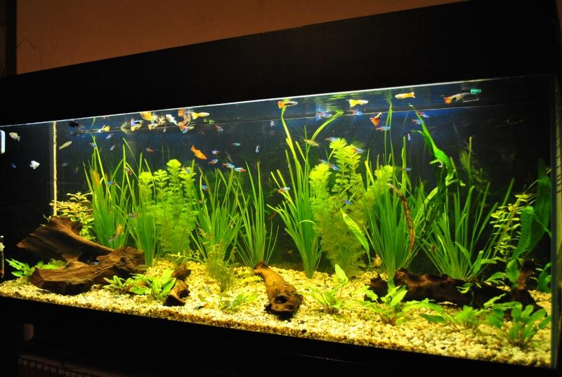 mon aquarium de 360 litres  - Page 2 Neige_11