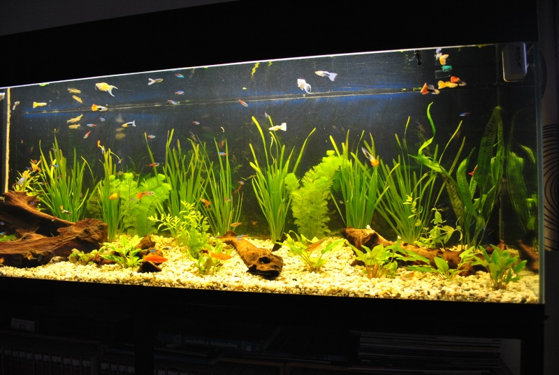 mon aquarium de 360 litres  Suite_11