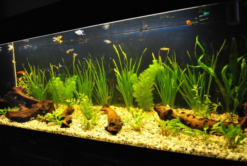 mon aquarium de 360 litres  Suite_12