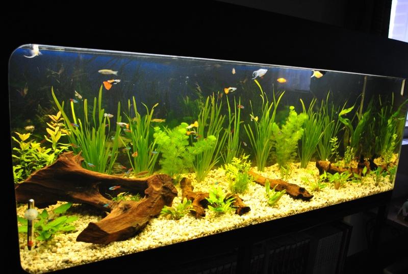 mon aquarium de 360 litres  Suite_13