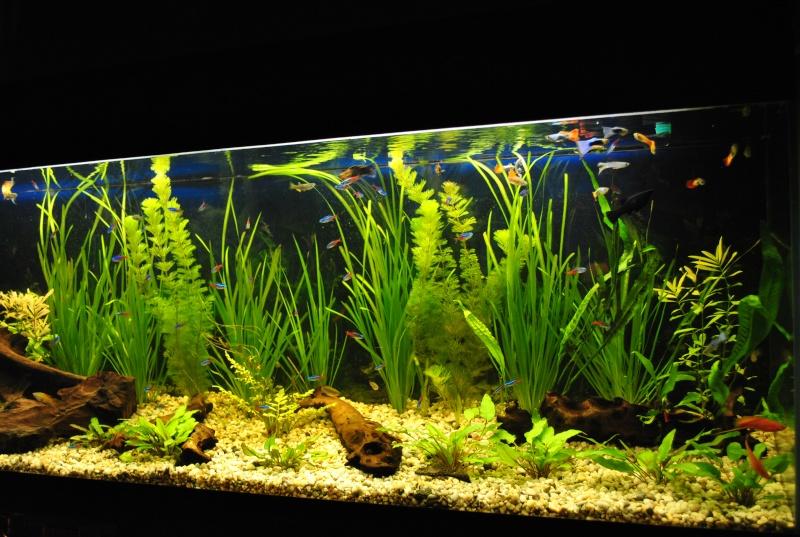 mon aquarium de 360 litres  - Page 2 Suite_18
