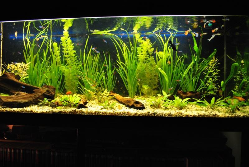 mon aquarium de 360 litres  - Page 2 Suite_19