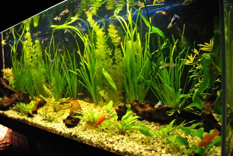 mon aquarium de 360 litres  - Page 2 Suite_20