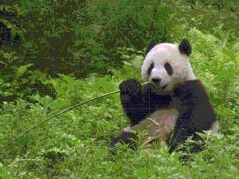 图片无聊进来看看-一切动物什么的很多-喜欢就看 U6617510