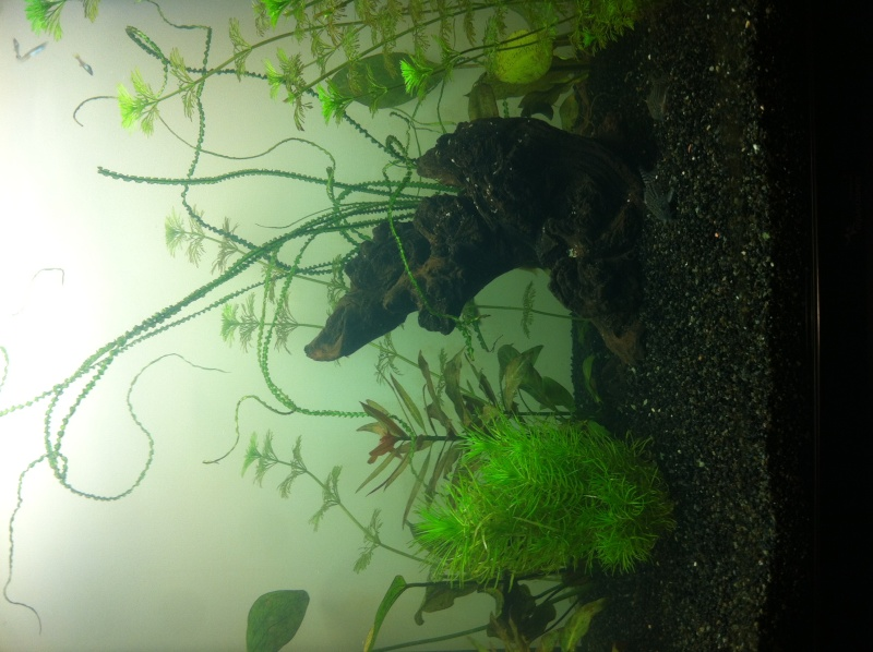 Démarrage aquarium 100L mais eau très dure, pH élevé Photo-16