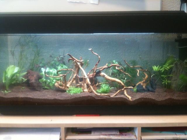 Démarrage aquarium 100L mais eau très dure, pH élevé - Page 2 Photo-18