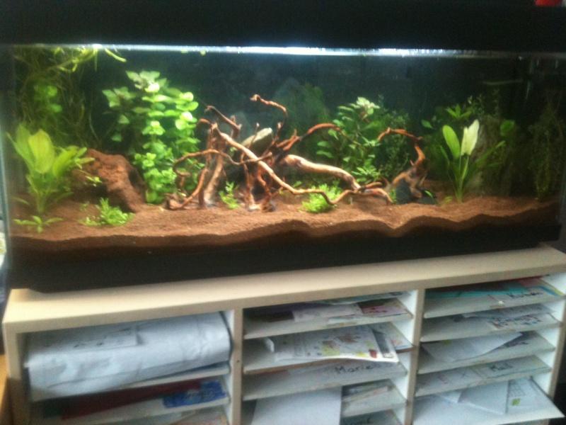 Démarrage aquarium 100L mais eau très dure, pH élevé - Page 2 Photo-23