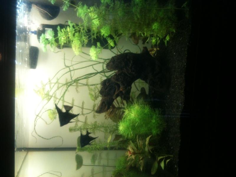 Démarrage aquarium 100L mais eau très dure, pH élevé - Page 3 Photo-24