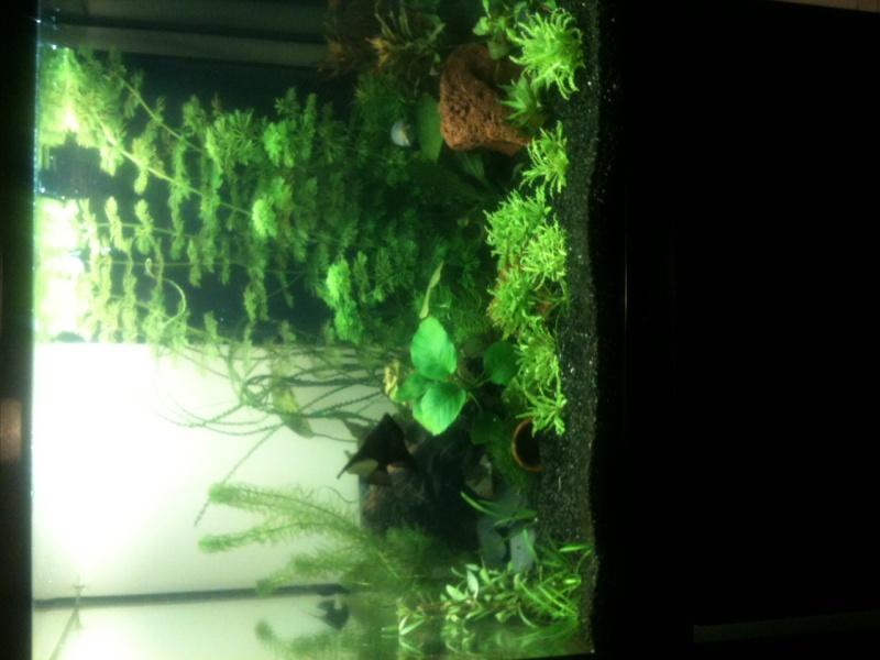 Démarrage aquarium 100L mais eau très dure, pH élevé - Page 3 Photo-25