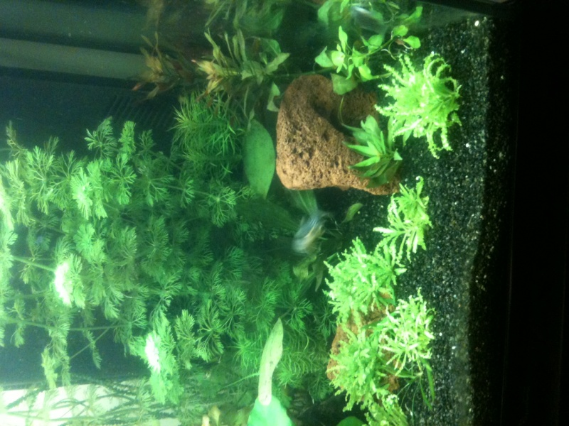 Démarrage aquarium 100L mais eau très dure, pH élevé - Page 3 Photo-26