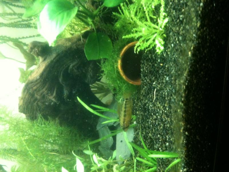 Démarrage aquarium 100L mais eau très dure, pH élevé - Page 3 Photo-27