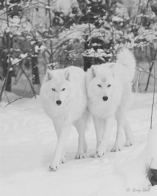 photos en noir et blanc - Page 3 15529_10