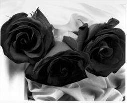 photos en noir et blanc - Page 2 76091_10